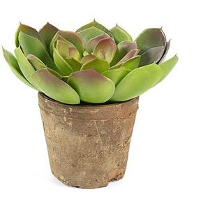 Plante succulente echeveria artificielle Zelena
