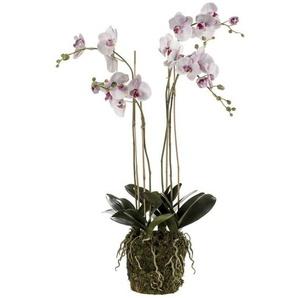 Emerald Phalaenopsis artificiel avec mousse Rose pâle 419149