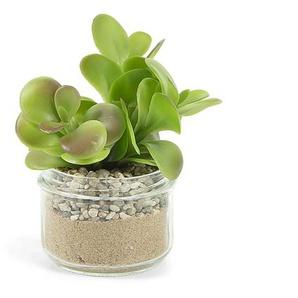 Plante succulente portulacaceae artificielle Zelena