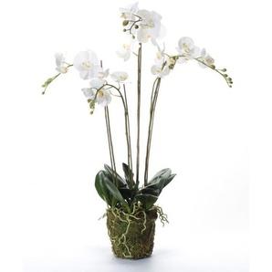 Emerald Phalaenopsis artificiel avec mousse Blanc 90 cm 20.355