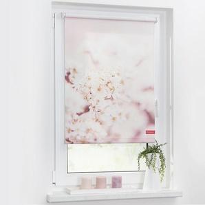 Store enrouleur cerisier en fleurs