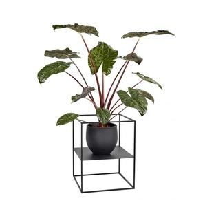 Serax Étagère Plant Display  - blanc - S