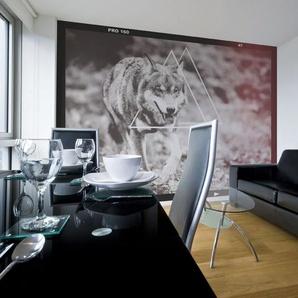 Papier peint - loup - photographie
