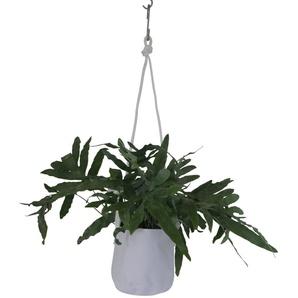 TRIMM Copenhagen Pot à fleurs Single  - gris