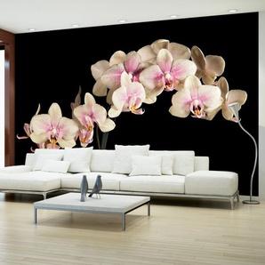 Papier peint - Orchidée en fleurs
